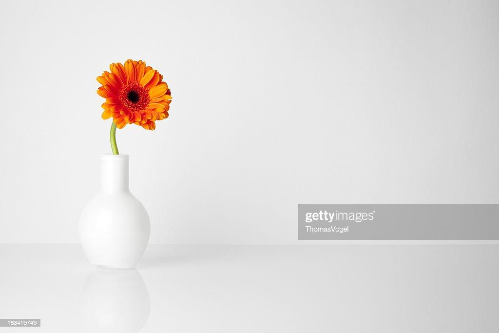 Gerbera flower in white vase : Stock Photo
