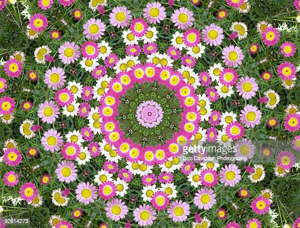 Gerbera Flower Kaleidoscope