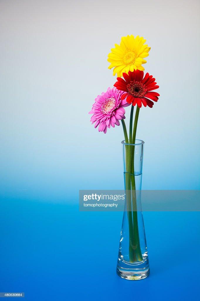 Gerbera flower : Stockfoto