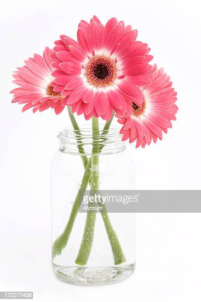 gerbera trio - single flower stock pictures, royalty-free photos & images