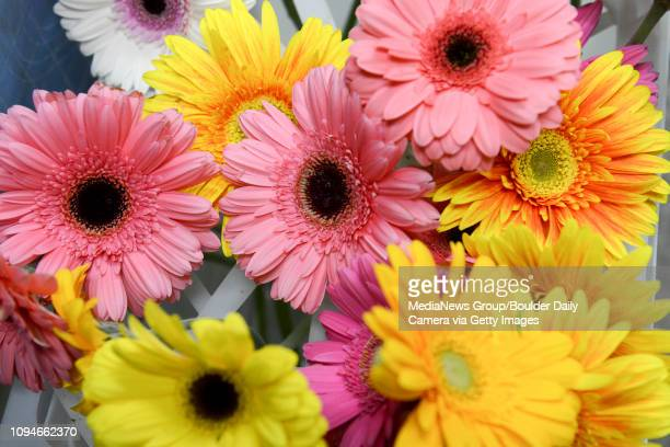 Gerberas wait to be used in arrangements for Mothers Day at Longmont Florist 614 Coffman St Friday morning May 08 2015