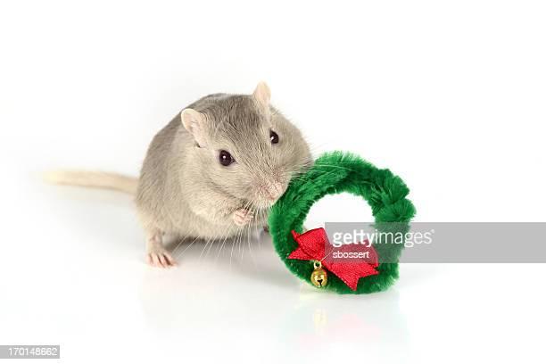Gerbil Holding Christmas Wreath