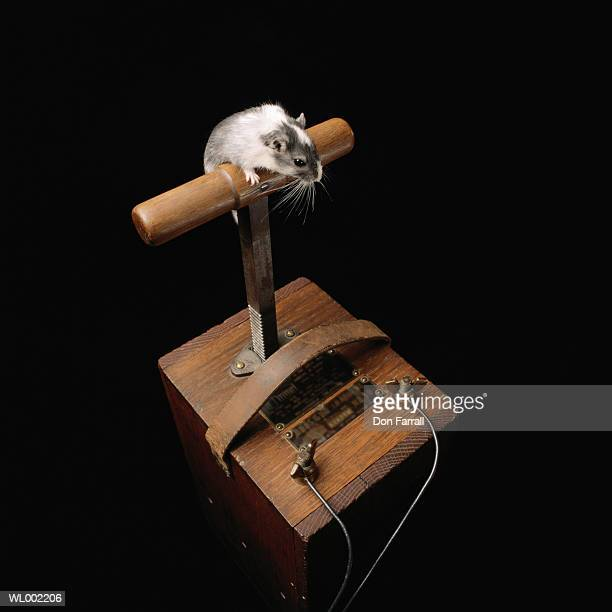 gerbil on blaster - detonator stock photos and pictures