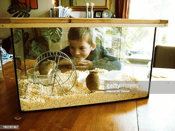 gerbils & boy - gerbil stock photos and pictures