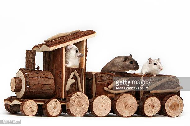 gerbils in wooden toy train against white background - gerbil - fotografias e filmes do acervo