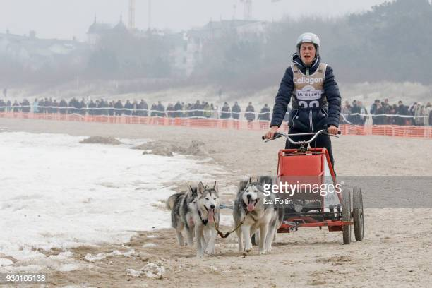 German actor Timothy Boldt runs with sled dogs during the 'Baltic Lights' charity event on March 10 2018 in Heringsdorf Germany The annual event...
