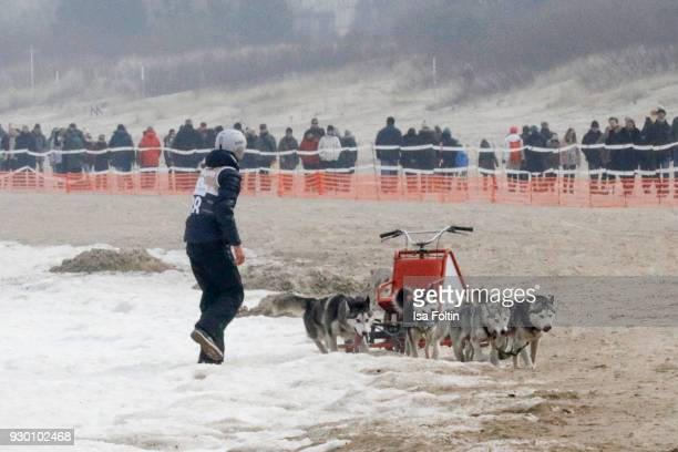 German actor Timothy Boldt with sled dogs during the 'Baltic Lights' charity event on March 10 2018 in Heringsdorf Germany The annual event hosted by...