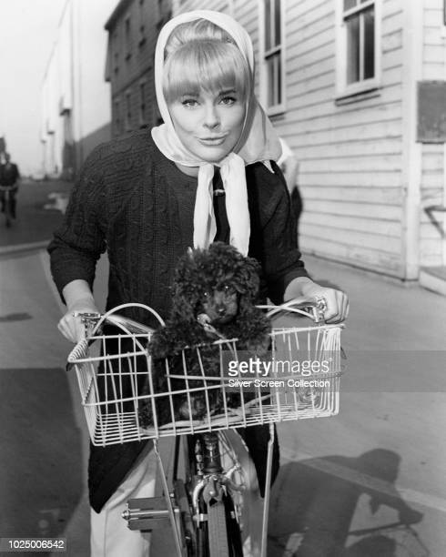 German actress Elke Sommer cycling with a pet poodle in the basket of her bicycle, circa 1963.