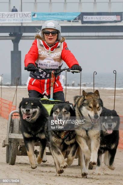 German actress Jutta Speidel runs with sled dogs during the 'Baltic Lights' charity event on March 10 2018 in Heringsdorf Germany The annual event...