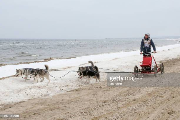 German actress Timothy Boldt runs with sled dogs during the 'Baltic Lights' charity event on March 10 2018 in Heringsdorf Germany The annual event...