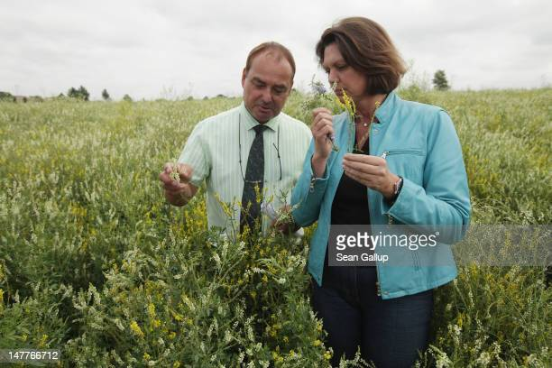 German Agriculture and Consumer Protection Minister Ilse Aigner and Joachim Zeller, head of Saaten Zeller, walk among flowering wild clover growing...