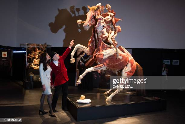 German anatomist and inventor of the plastination technique Gunther von Hagens poses with his wife Angelina Whalley next to an artwork entitled...