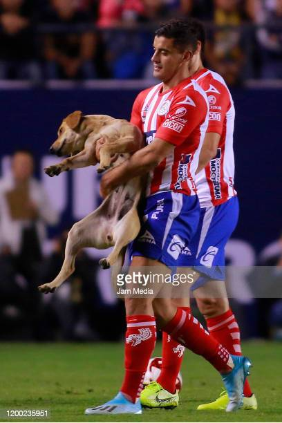 German Berterame of San Luis takes a dog out of the field during the 2nd round match between Atletico San Luis and Cruz Azul as part of the Torneo...