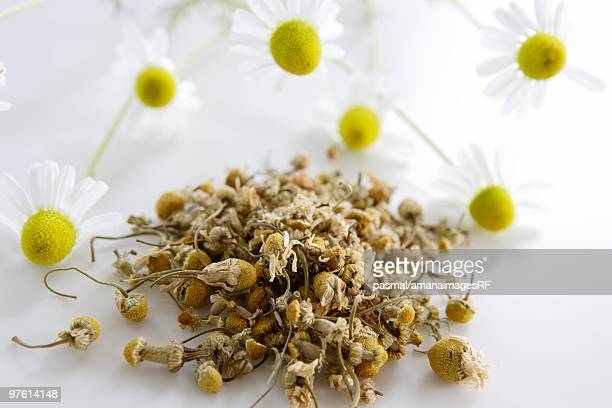 German chamomile tea leaves and flowers