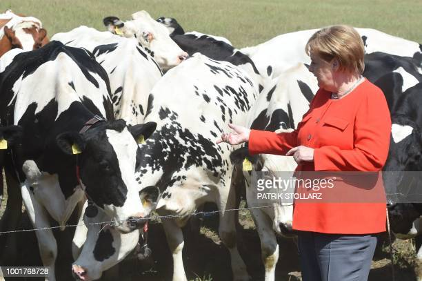 German Chancellor Angela Merkel views the cows grazing in a field at the Trede family's dairy farm on July 19 2018 in Nienborstel northern Germany