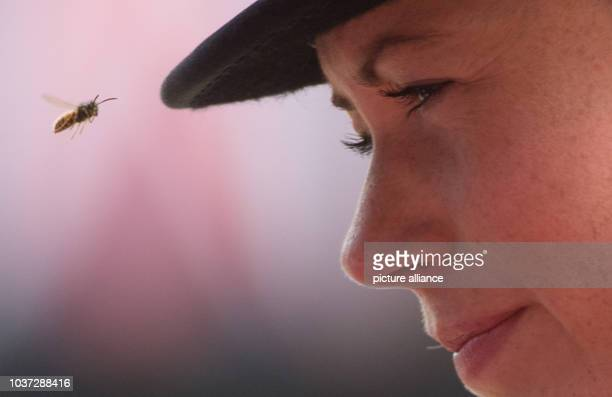 German dressage rider Kristina Sprehe is teased by a wasp during the victory ceremony of the team competition of the FEI European Championships in...