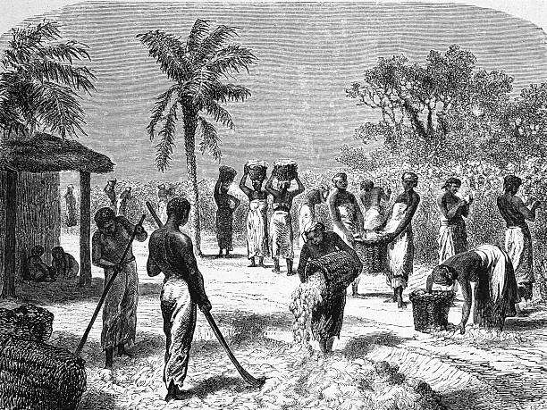 German engraving shows slaves as they harvest and process...
