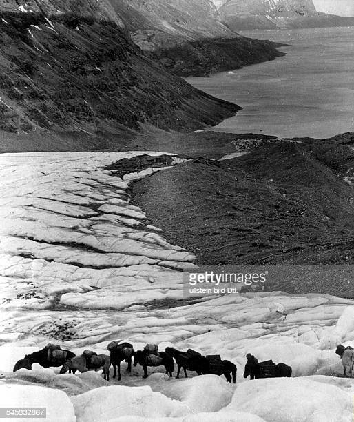 ALFRED LOTHAR WEGENER German geophysicist and meteorologist Pack horses transporting oil for the snowmobiles during his final Greenland expedition...