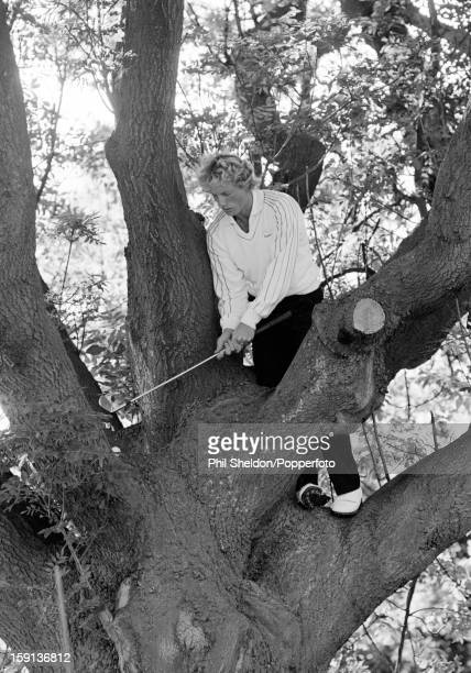 German golfer Bernhard Langer playing his ball in an ash tree adjacent to the 17th green at Fulford golf course in Yorkshire after his second shot...