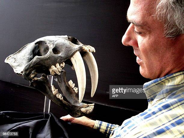 German paleontologist Klaus Hönninger informs about the discovery of a fossilized skull of a Smilodon in La Libertad northern Peru on October 26 2009...