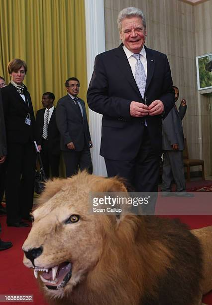 German President Joachim Gauck smiles before touching a stuffed lion after meeting with Ethiopian Prime Minister Hailemariam Desalegn at the...