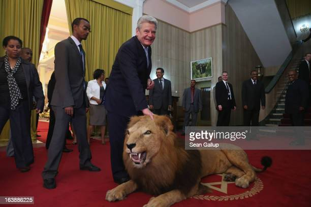 German President Joachim Gauck touches a stuffed lion after meeting with Ethiopian Prime Minister Hailemariam Desalegn at the Presidential Palace on...