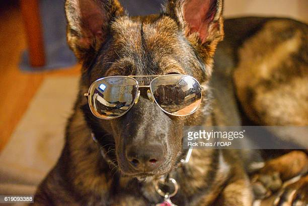 Funny German Shepherd Stock Photos And Pictures