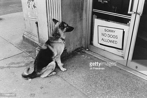 A German Shepherd appears to be reading a sign on a doorway which declares 'Sorry No Dogs Allowed' Sheridan Square Greenwich Village New York 1973