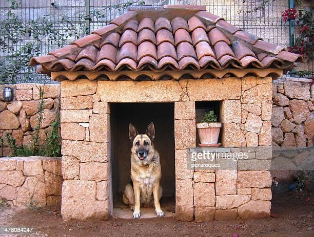 German Shepherd at home