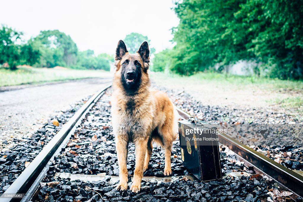 Hobo Dog On Railroad Tracks Stock Photo - Download Image