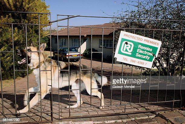 German Shepherd Guarding Home in Johannesburg