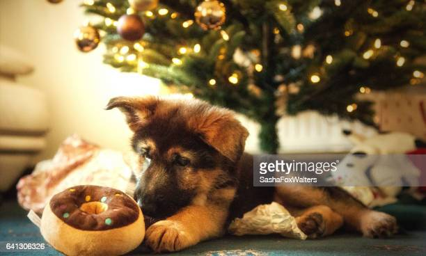 German Shpherd Puppy with Christmas decorations