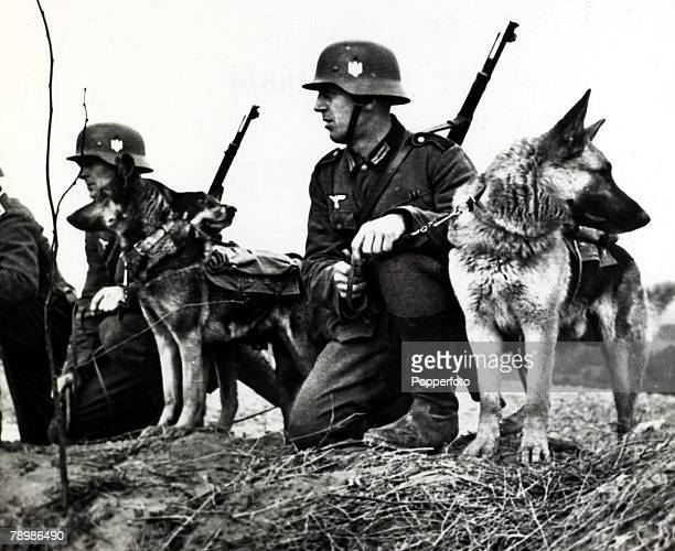 1940 German soldiers with their Alsatian messenger dogs in position Germany's victory in France in 1940 followed the Phoney War and the German...