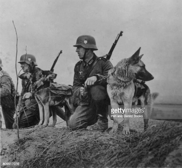 German Soldiers With Their Alsatians