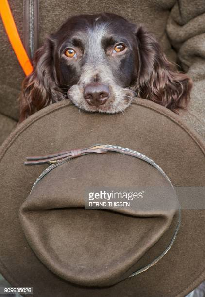German spaniel 'Loop' retrieves his owner's hat on January 24 2018 in Dortmund western Germany as the dog promotes the 'Jagd Hund' and 'Fisch Angel'...