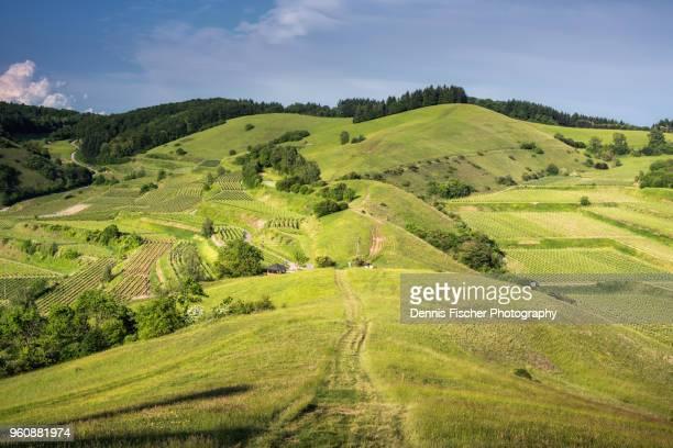 German summer landscape