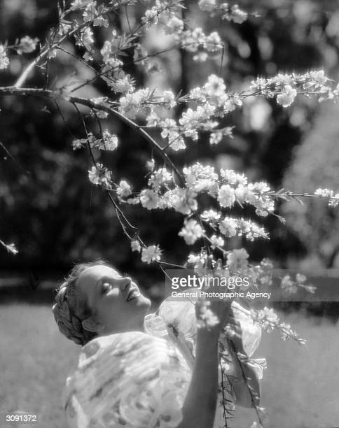 Germanborn actress and singer Marlene Dietrich communing with a tree in a scene from the film 'Song Of Songs' directed by Rouben Mamoulian for...