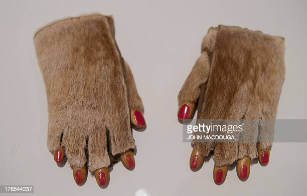 Germanborn Swiss artist Meret Oppenheim's Fur Gloves 1936 is on display at the Meret Oppenheim Retrospective in Berlin on August 15 2013 The...