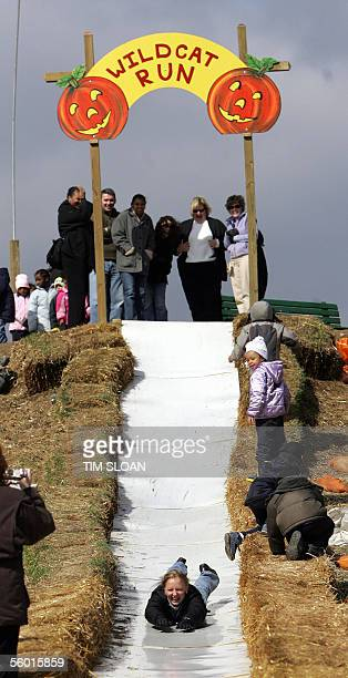 Adults enjoy a slide 26 October during Butler's Orchard Annual Pumpkin Festival in Germantown Maryland Buttler's Orchard festival has been a family...