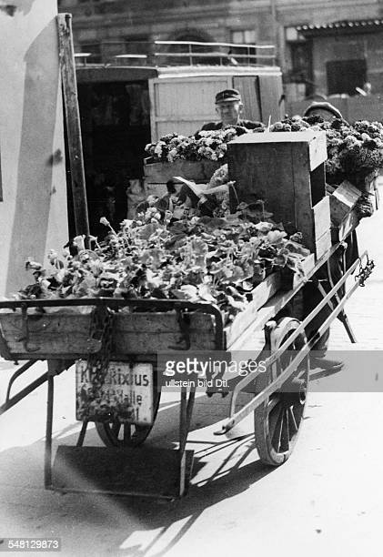 Germany 19451949 Berlin A trader of flowers transporting plants on a special market hall van Photographer Walter Gircke Vintage property of ullstein...