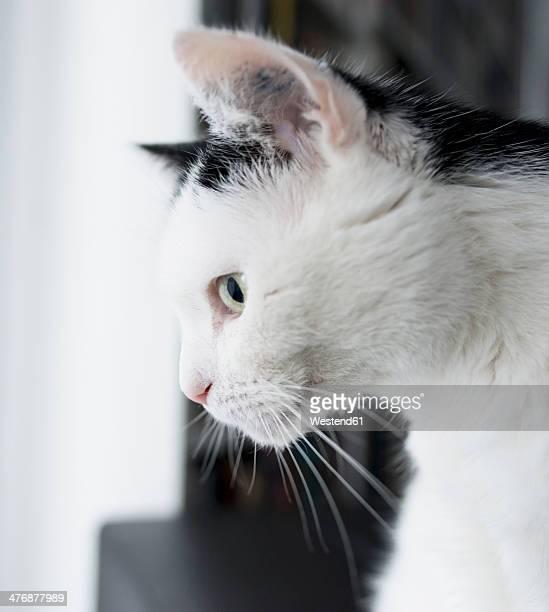 Germany, Aachen, portrait of a male cat