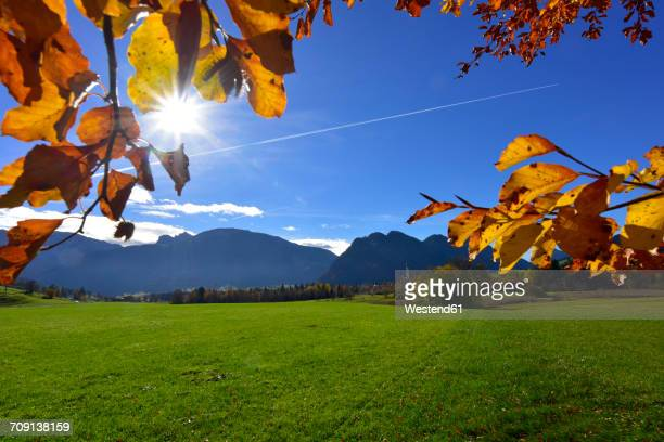 Germany, Allgaeu, meadow and autumn leaves at backlight