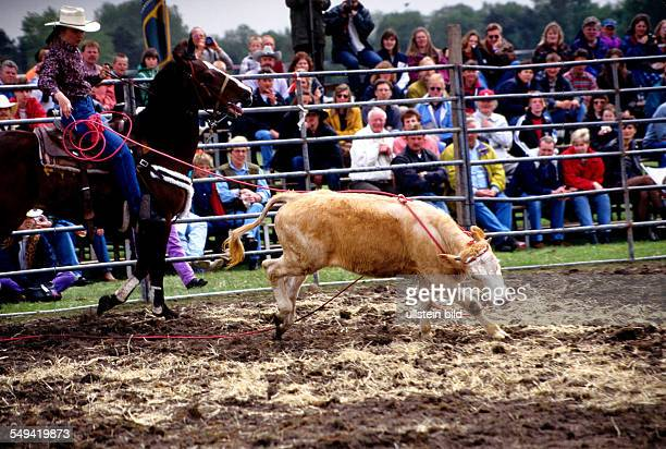 American rodeo catching a calf with a lasso
