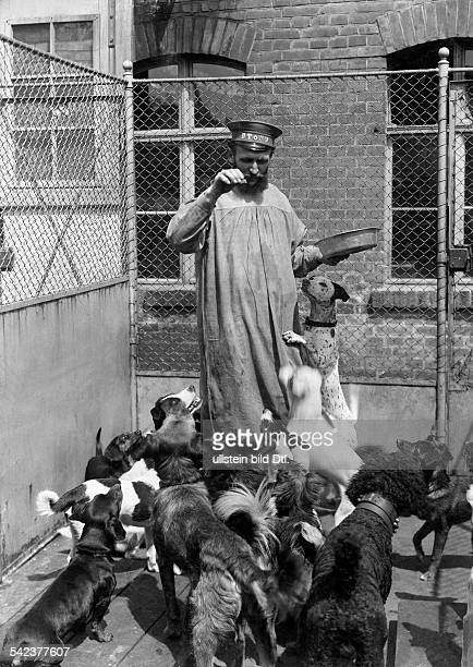 Germany Animal protection keeper with dogs at dog pound of an Berliner Animal welfare organization 1899 Photographer Waldemar Titzenthaler