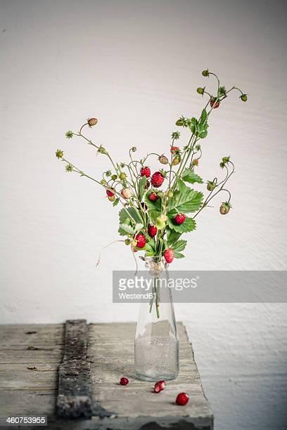 Germany, Baden Wuerttemberg, Bouquet of wild strawberries in bottle
