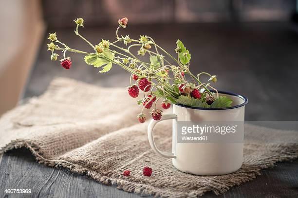 Germany, Baden Wuerttemberg, Bouquet of wild strawberries  in enamel cup on rug