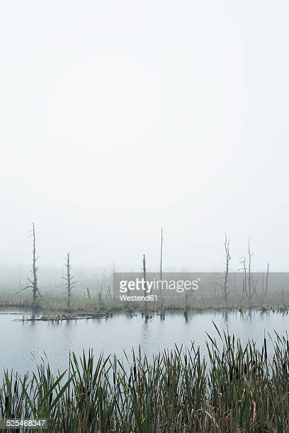 Germany, Baden Wuerttemberg, Schwarzwald-Baar-District, Schwenninger Moos Nature Reserve, Fog