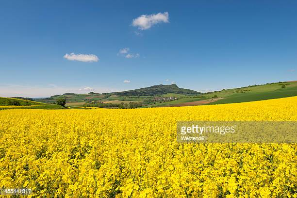 Germany, Baden Wuerttemberg, View of yellow rape field
