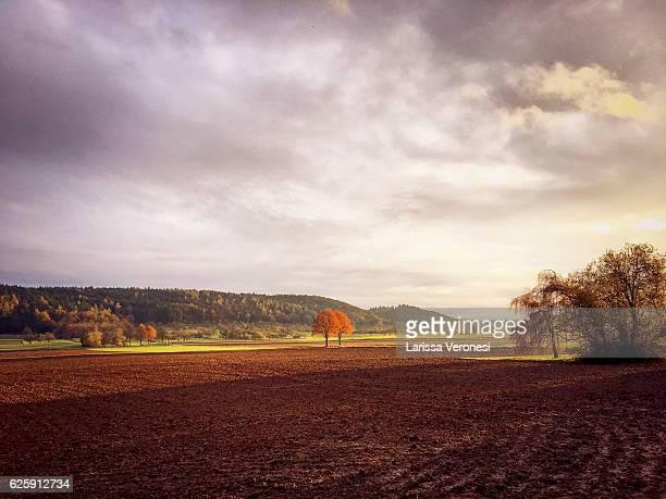 Germany, Baden-Württemberg, autumnal landscape