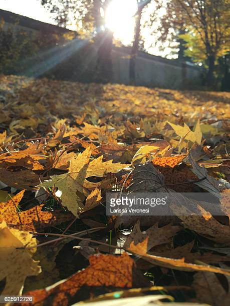 Germany, Baden-Württemberg, leaves and foliage in autumn